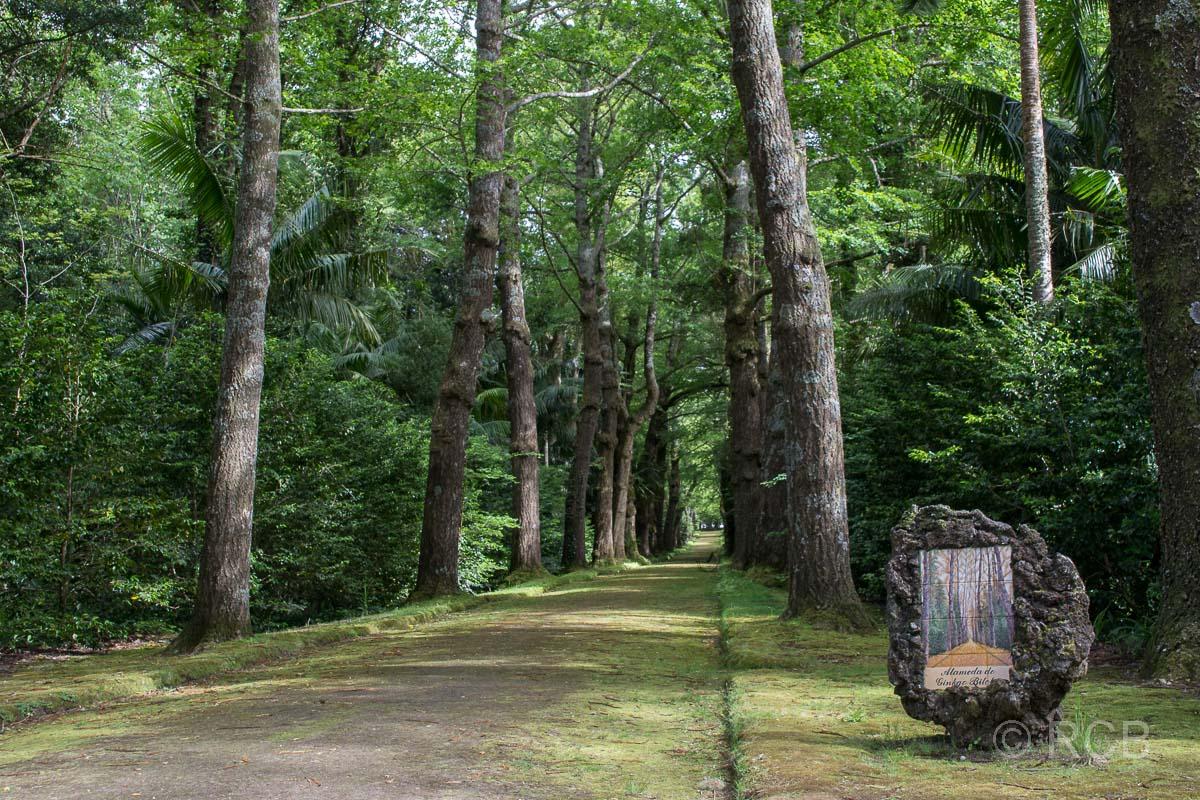 Allee im Parque Terra Nostra