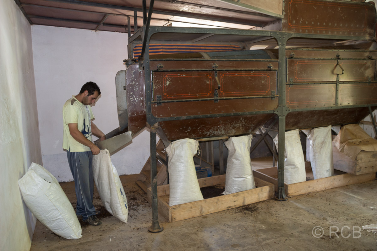 Mann füllt Tee in Säcke in der Teefabrik Cha Gorreana