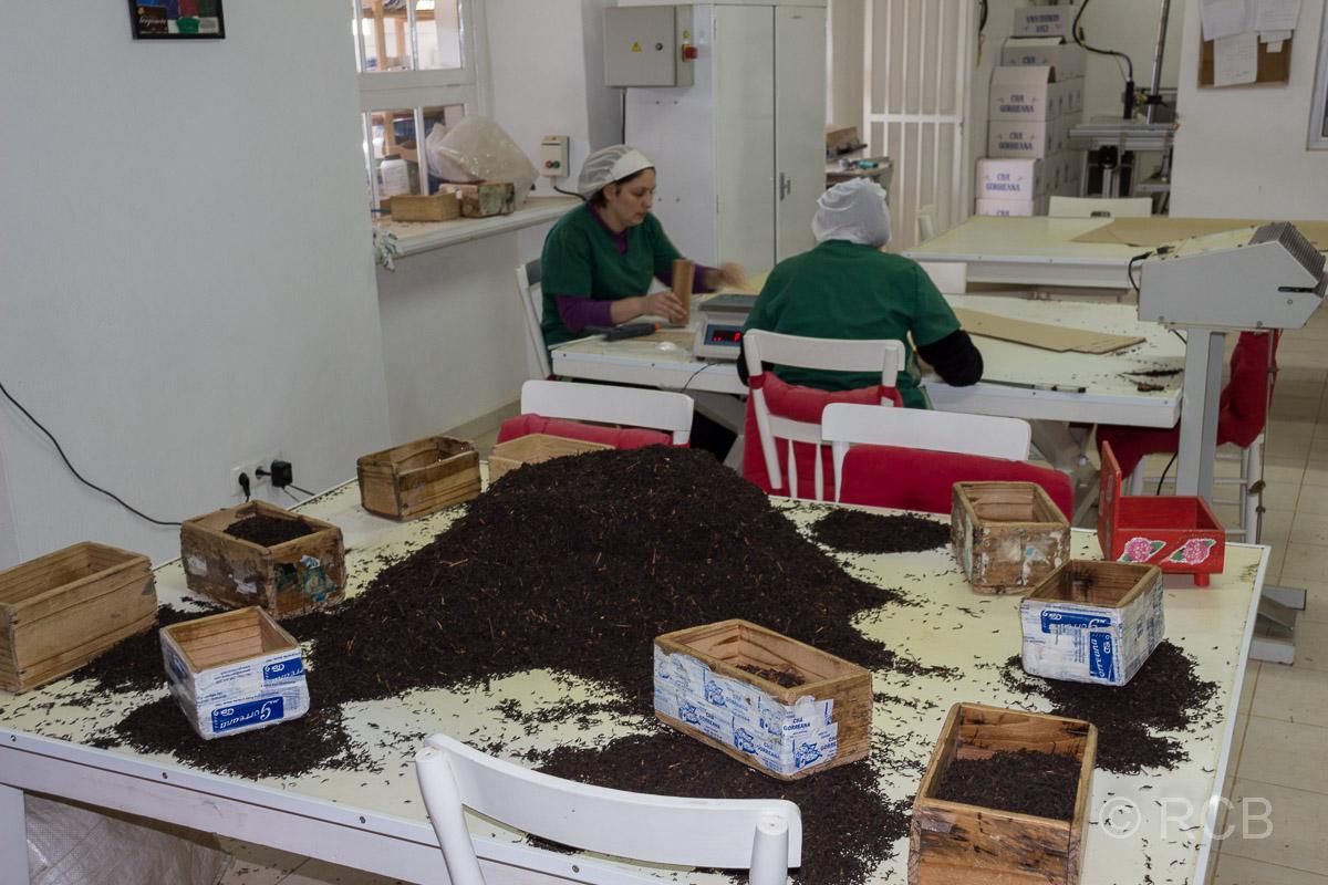 Verpackerinnen in der Teefabrik Cha Gorreana
