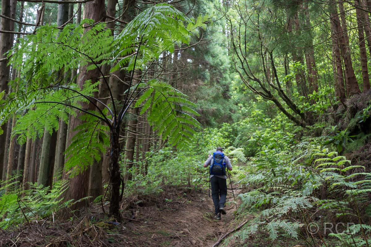 Wanderer am Beginn des Aufstiegs zum Pico da Vara im Wald neben einem Baumfarn
