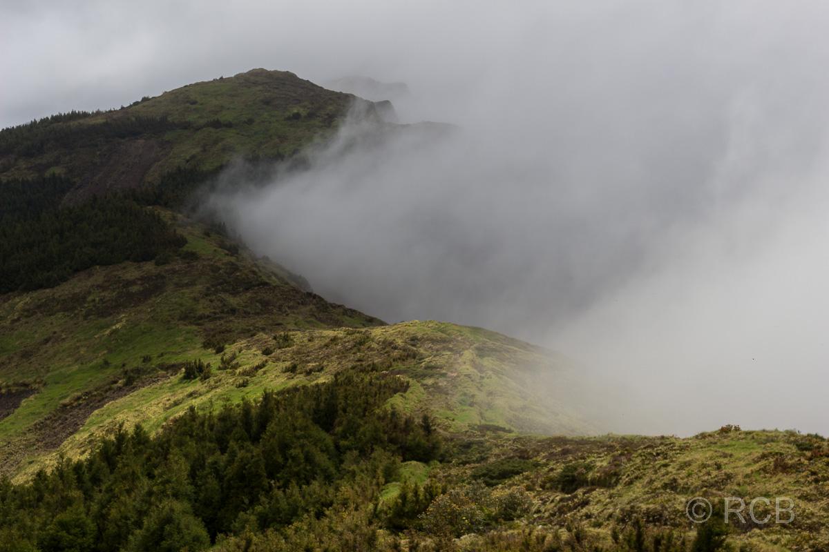 Nebel zieht auf oberhalb der Baumgrenze