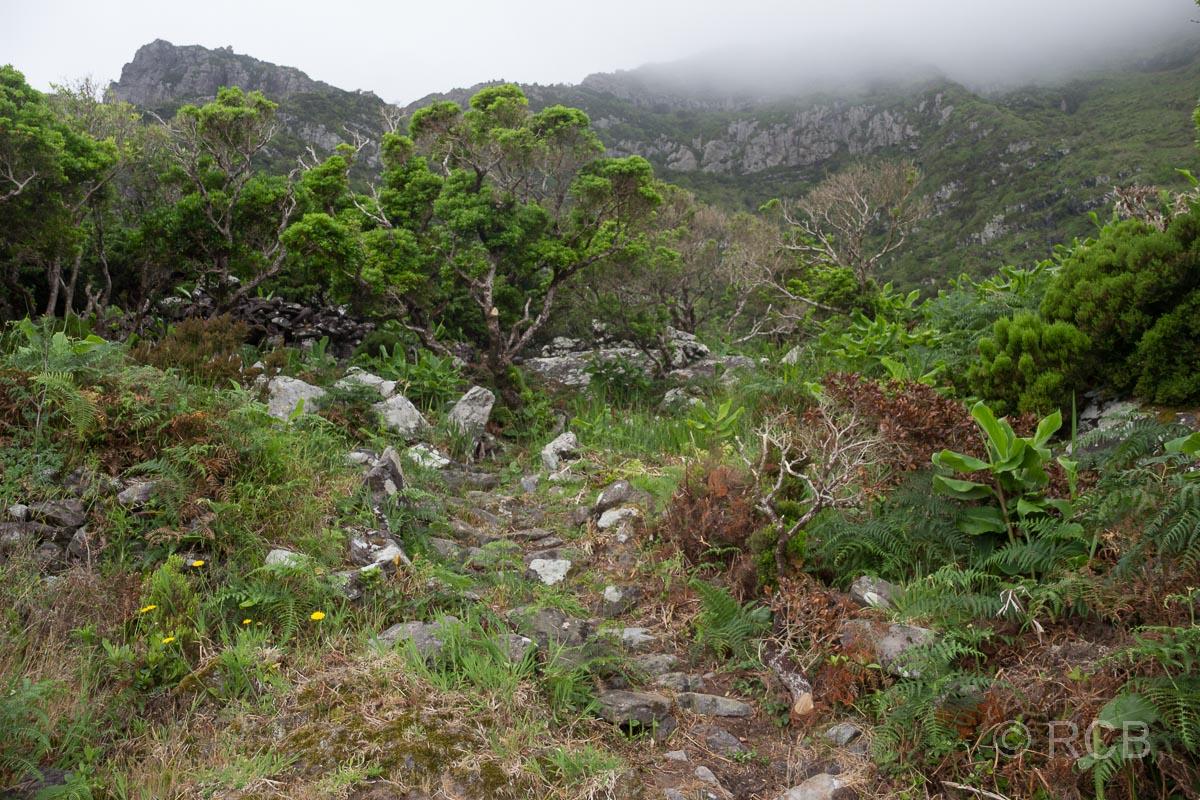 neblige, sattgrüne Landschaft auf dem PR1FLO