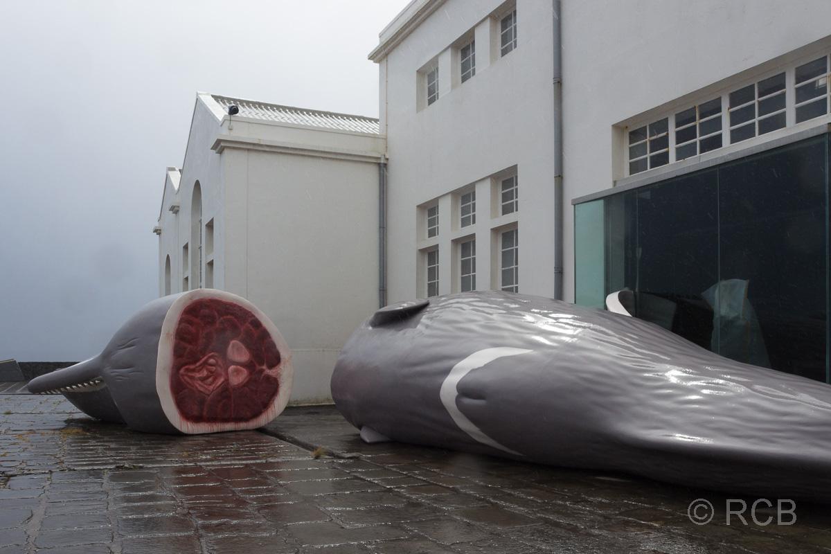 Santa Cruz, vor dem Walfangmuseum