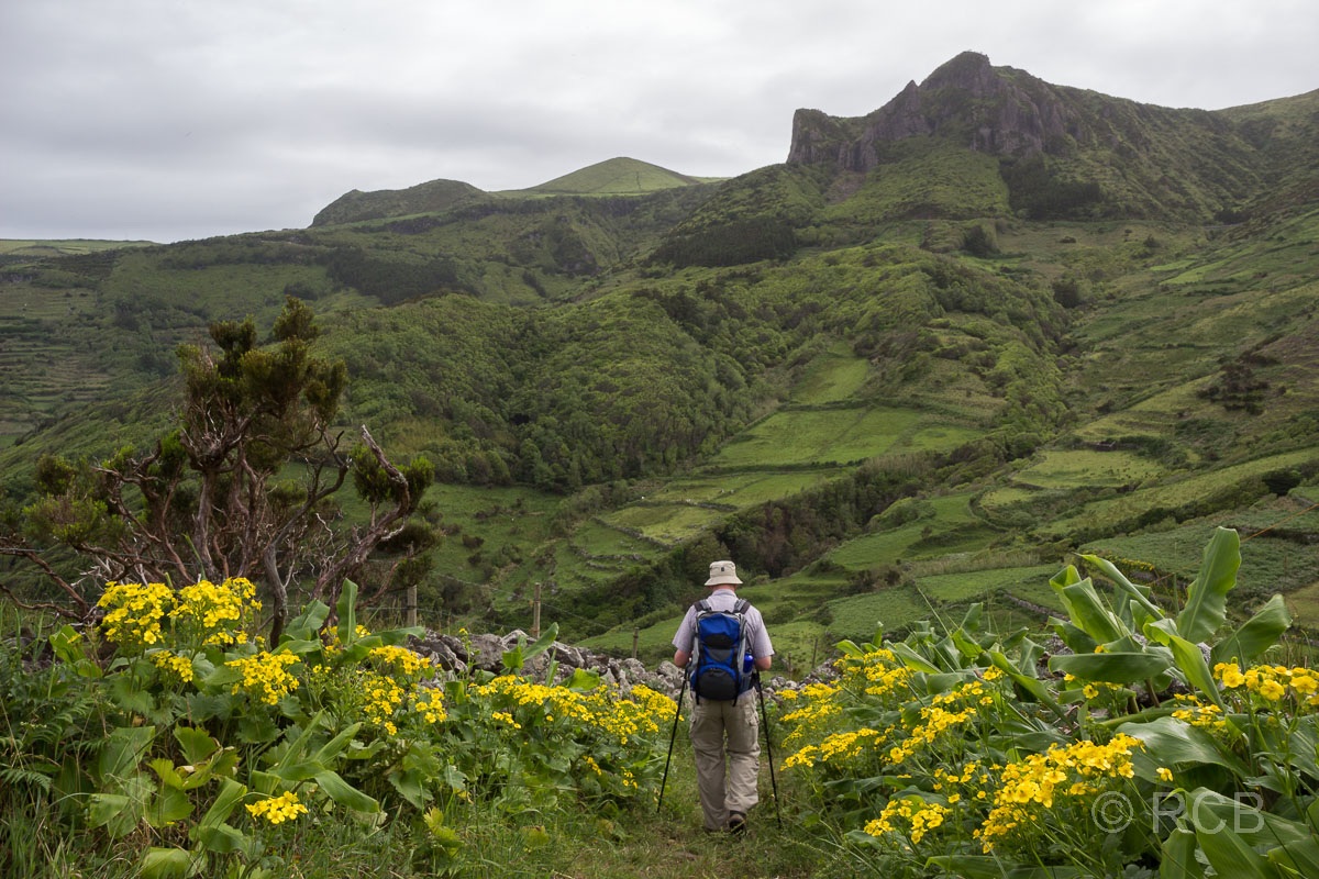 Mann wandert zwischen gelb blühenden Büschen auf dem PR2FLO
