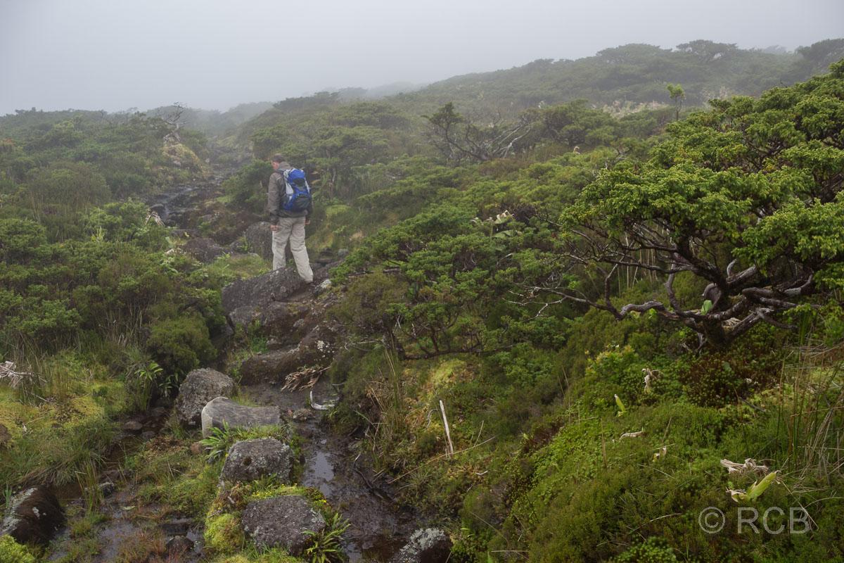 Mann auf einer Wanderung im Nebel zwischen den Seen der Hochebene