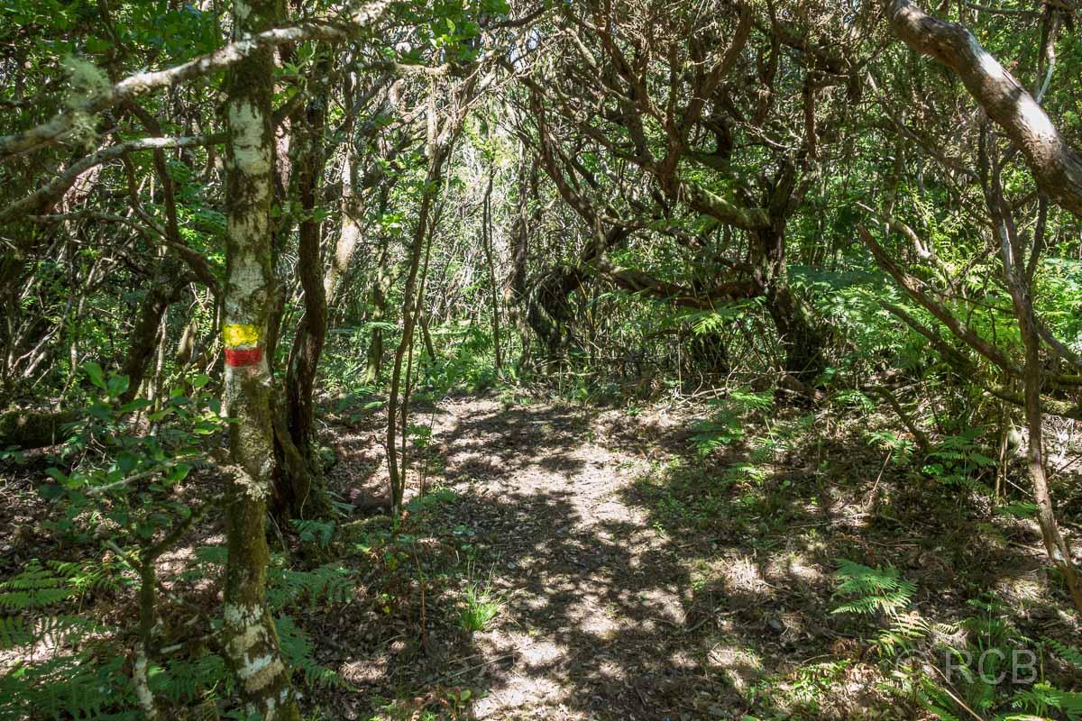 Wanderweg PR13PIC im lichten Wald mit Wegmarkierung