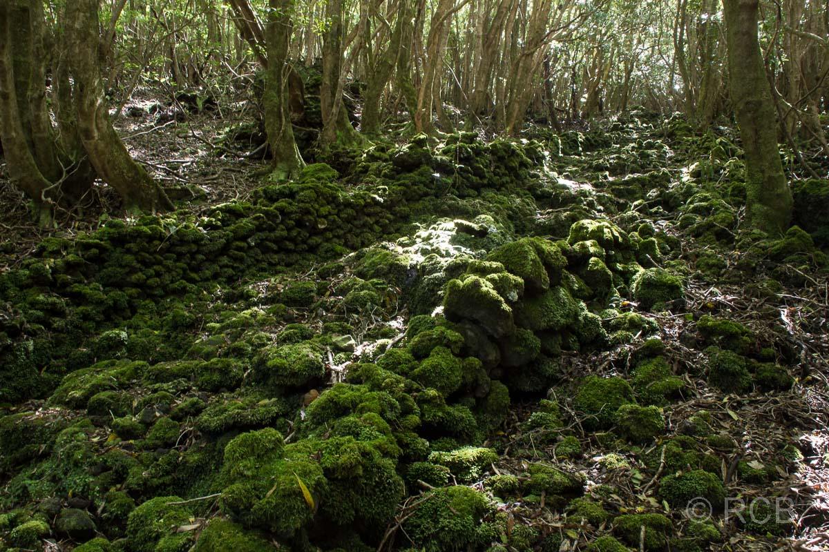 moosüberwucherter Natursteinweg auf dem PR13PIC