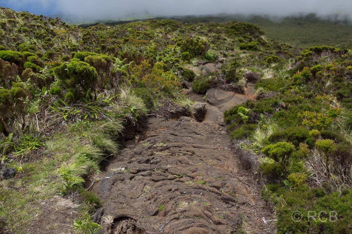 Der Weg verlief z.T. direkt auf erstarrter Lava.