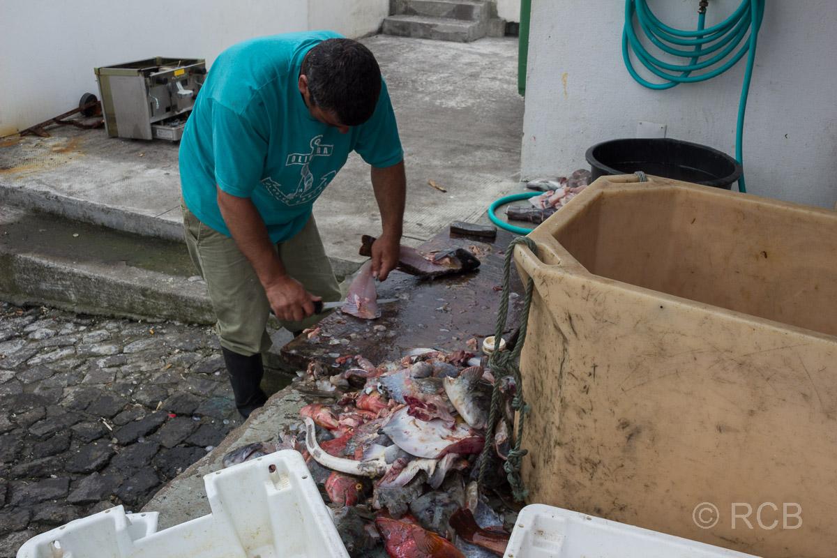 Calheta de Nesquim, Fischer beim Filettieren seines Fangs