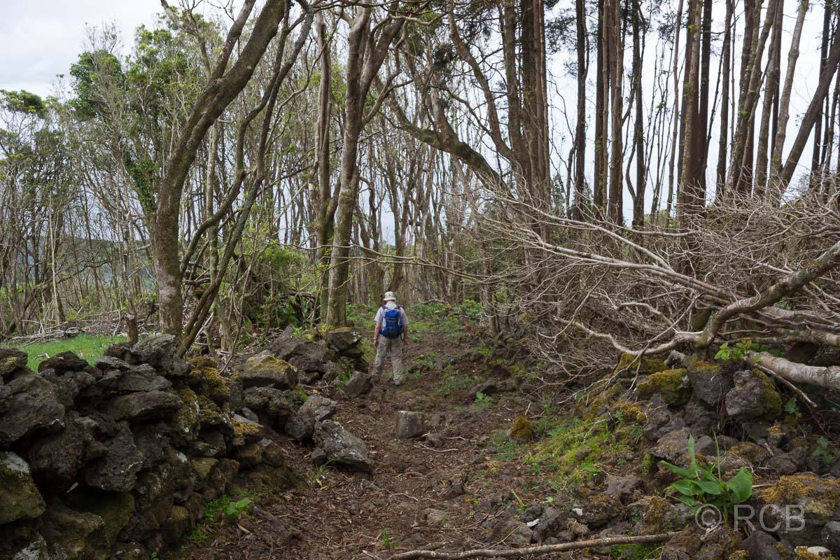 Wanderer geht durch einen lichten Wald auf dem Wanderweg PRC11PIC