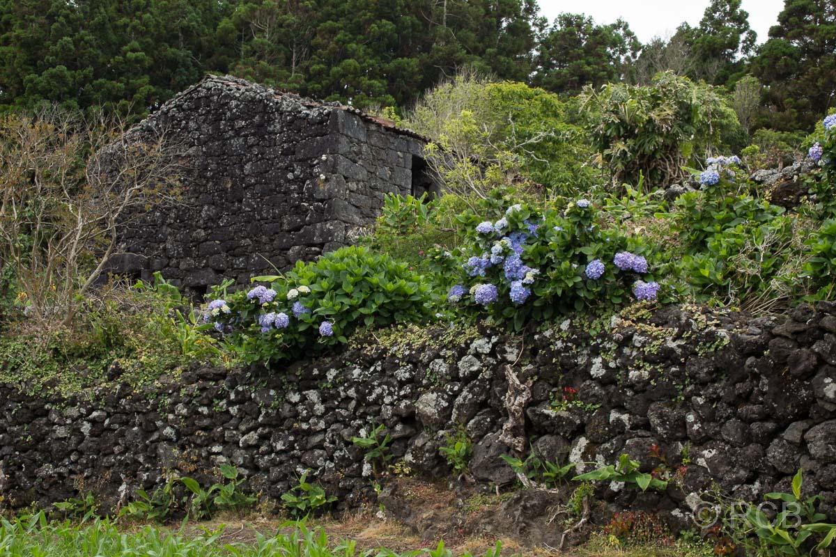 Steinhaus und blaue Hortensien am Wanderweg PRC11PIC