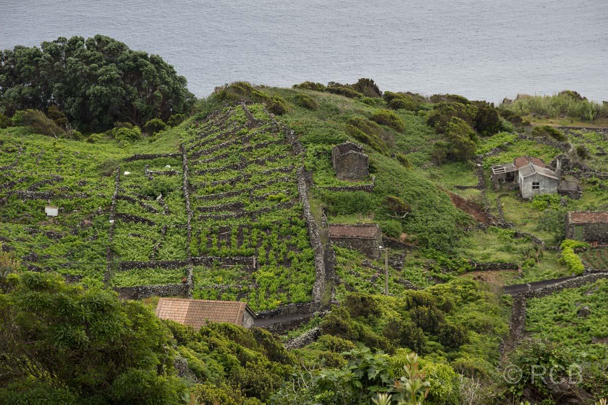 Blick von oben auf Weingärten am Wanderweg PRC11PIC