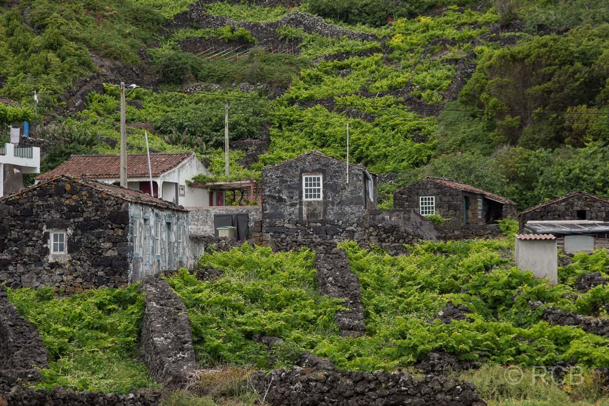 Weingärten am Wanderweg PRC11PIC
