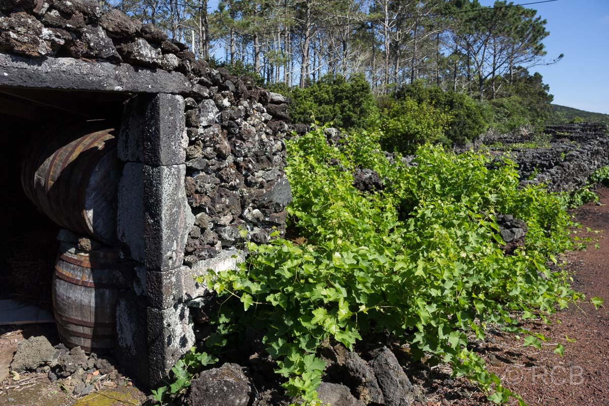 Schuppen und Rebstöcke in den Weinbaufeldern