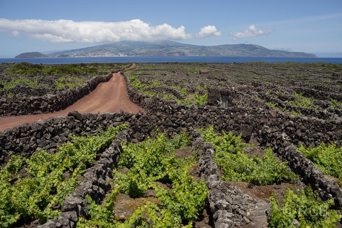 typische Parzellierung der Weinbaufelder auf Pico