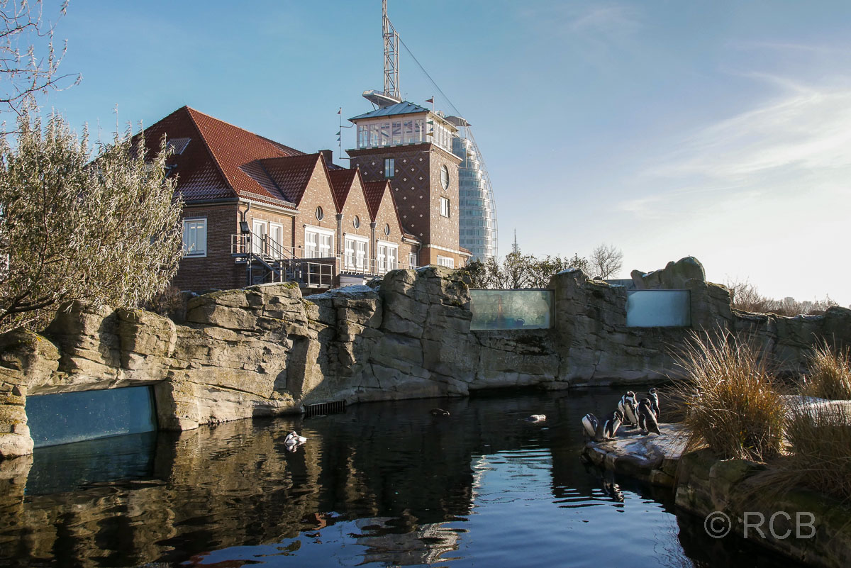 Pinguine, Zoo am Meer, Bremerhaven