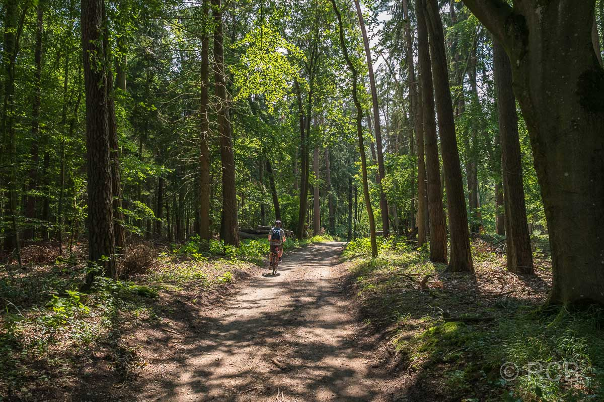 Radfahrer im Wald bei Nehmten
