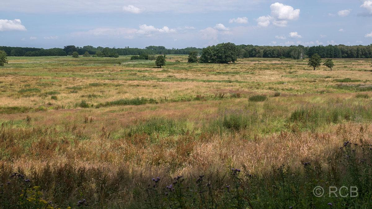 Wiesenlandschaft am Südufer des Großen Plöner Sees