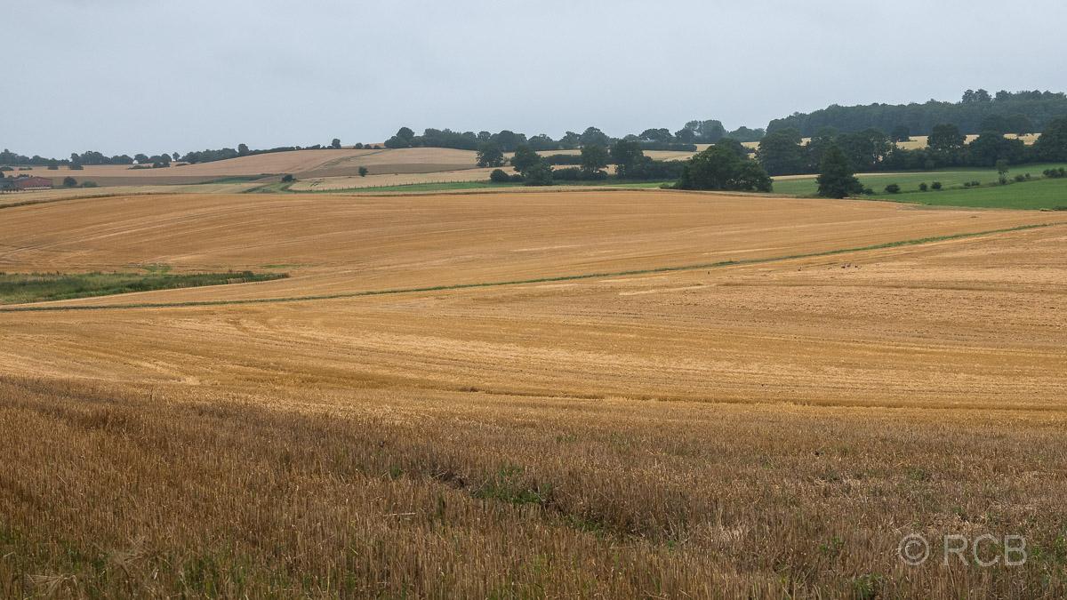 weite Getreidefelder