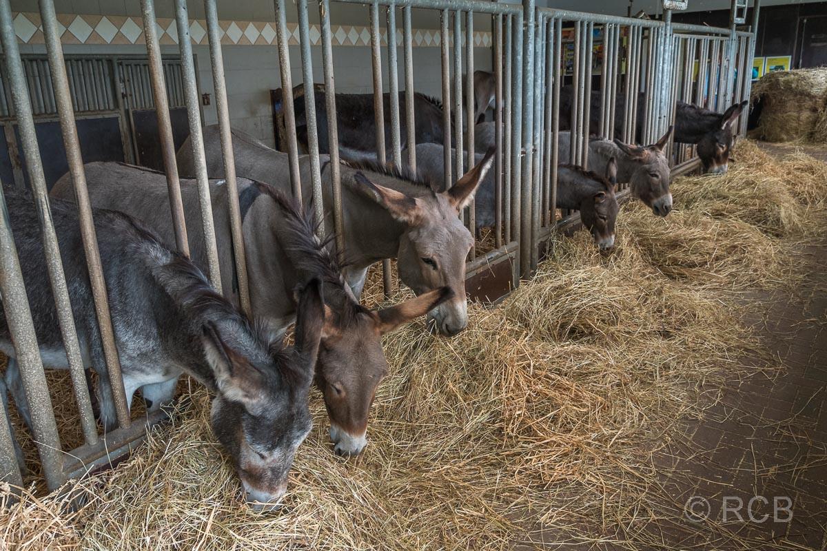 Esel im Esel- und Landspielhof Nessendorf