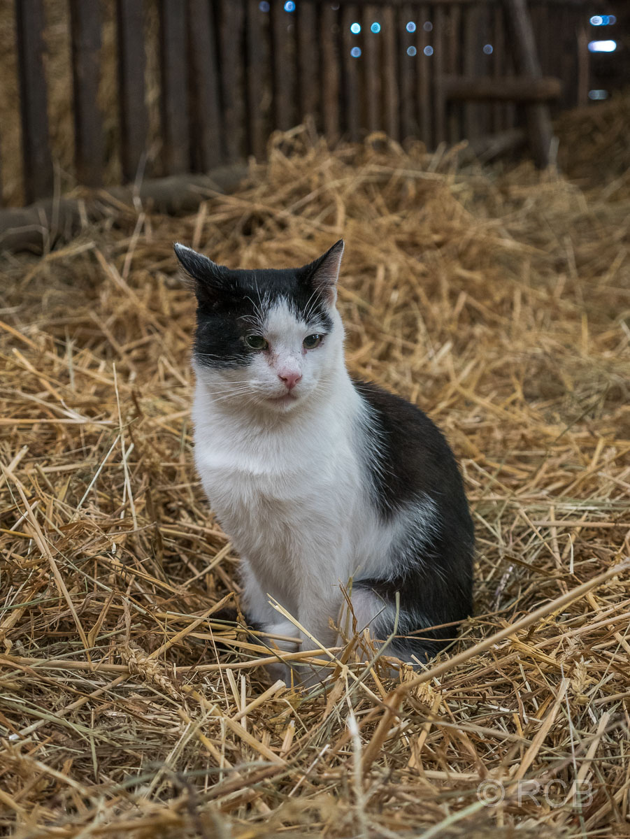 Katze im Esel- und Landspielhof Nessendorf