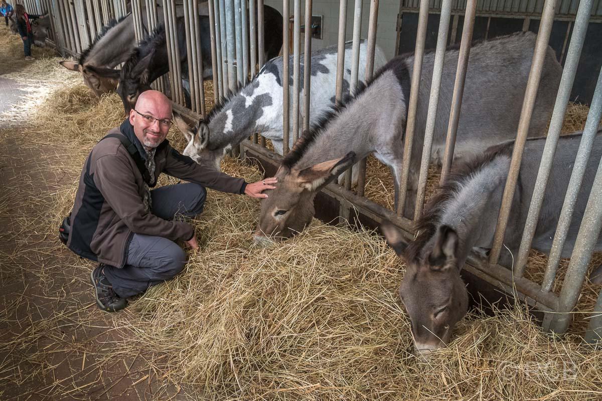Mann streichelt einen Esel im Esel- und Landspielhof Nessendorf