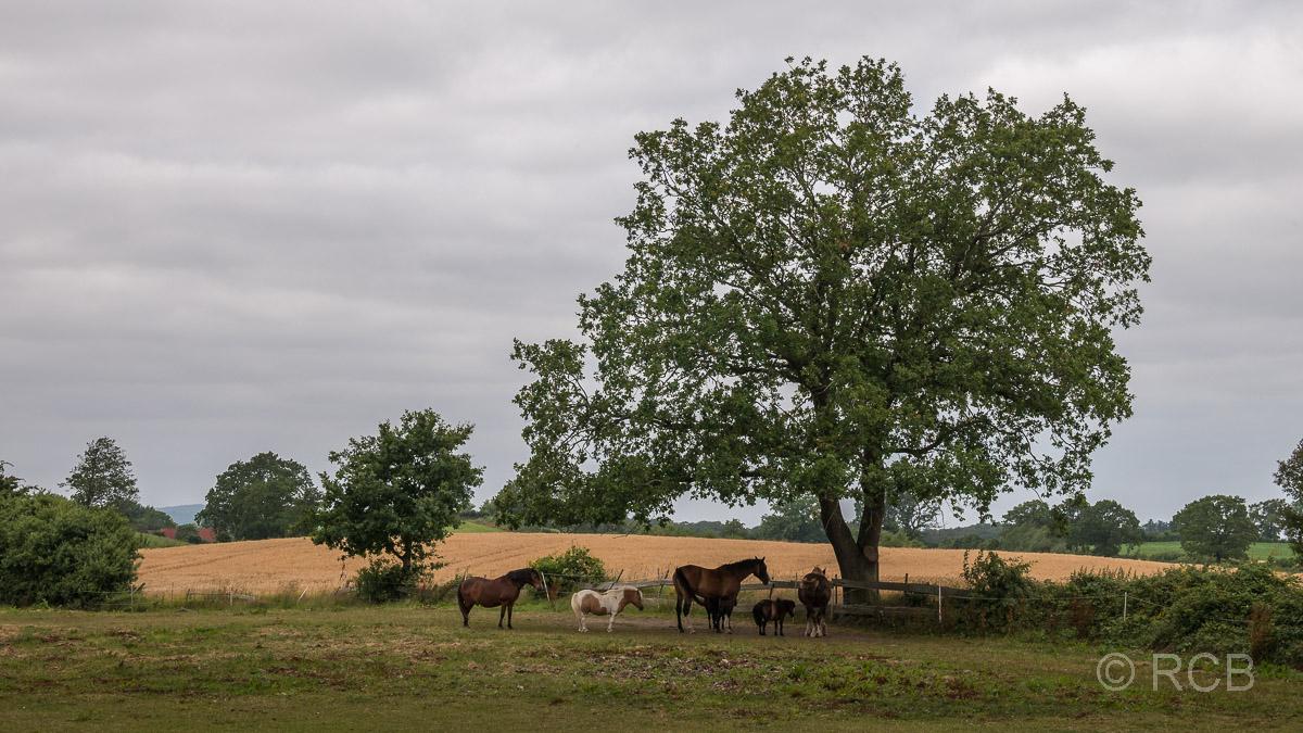 Wiese mit Pferden unter einem Baum