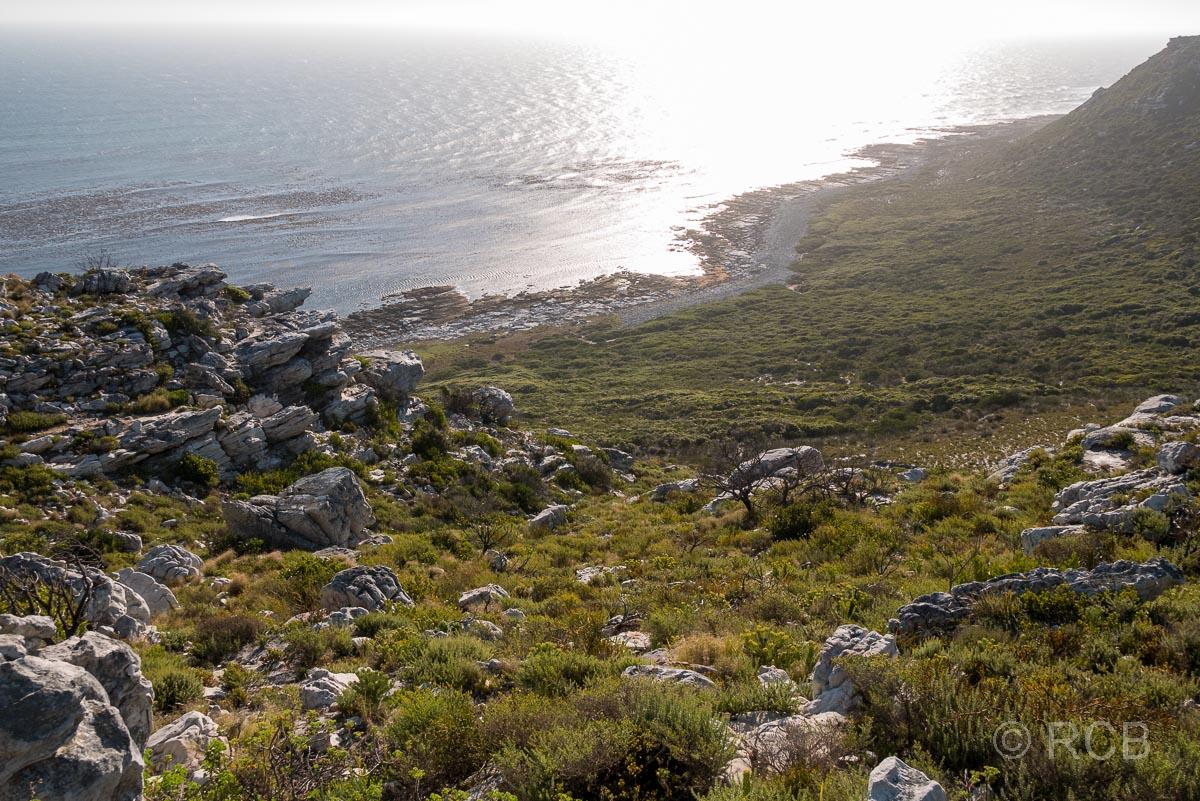 Gifkommetjie, Table Mountain NP