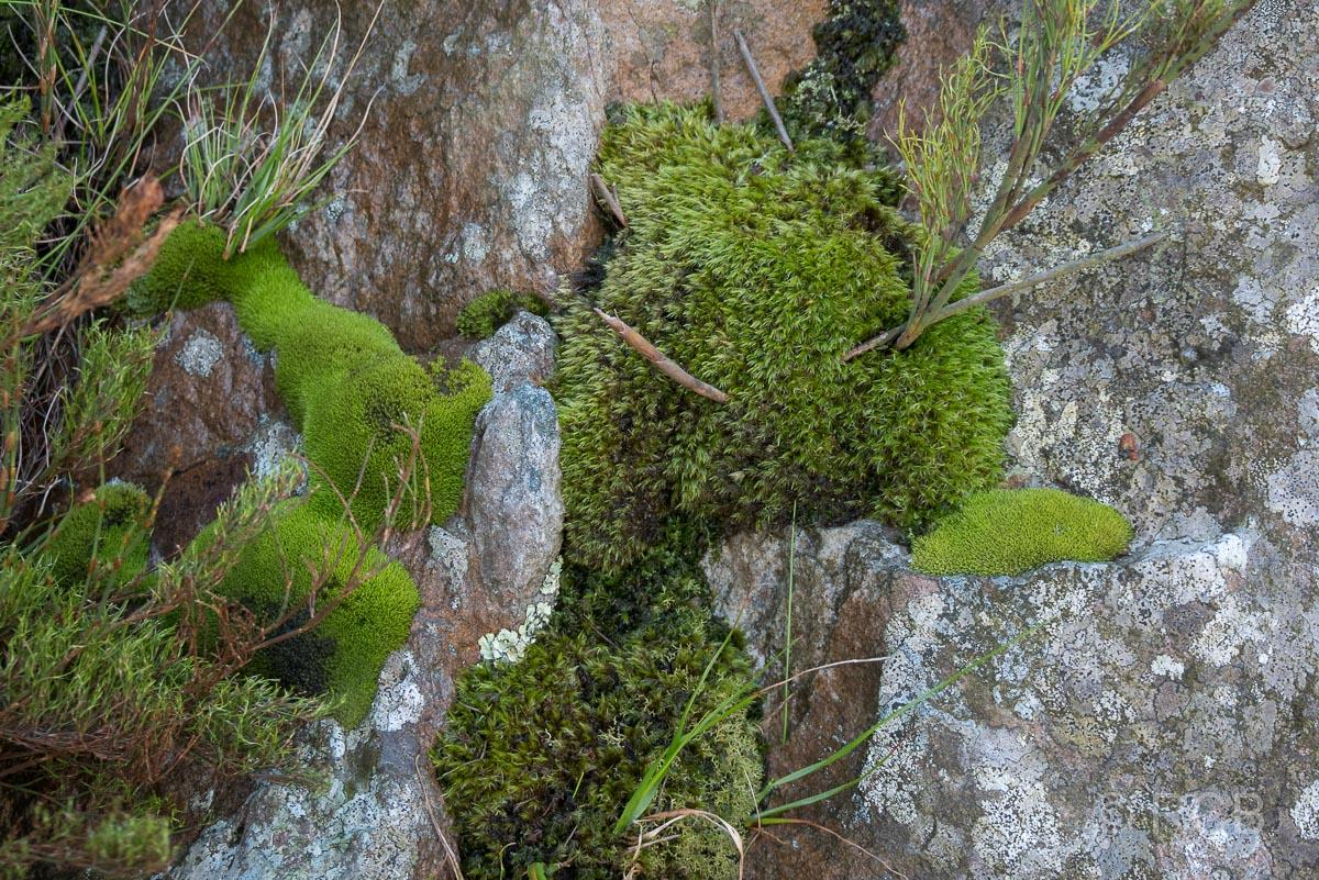 im Jonkershoek Nature Reserve