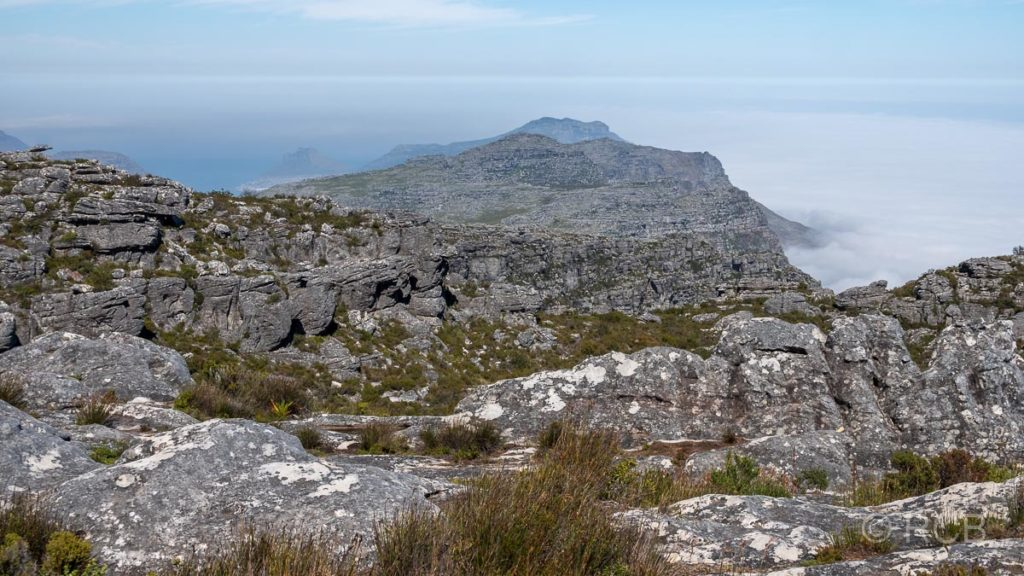 auf dem Tafelberg