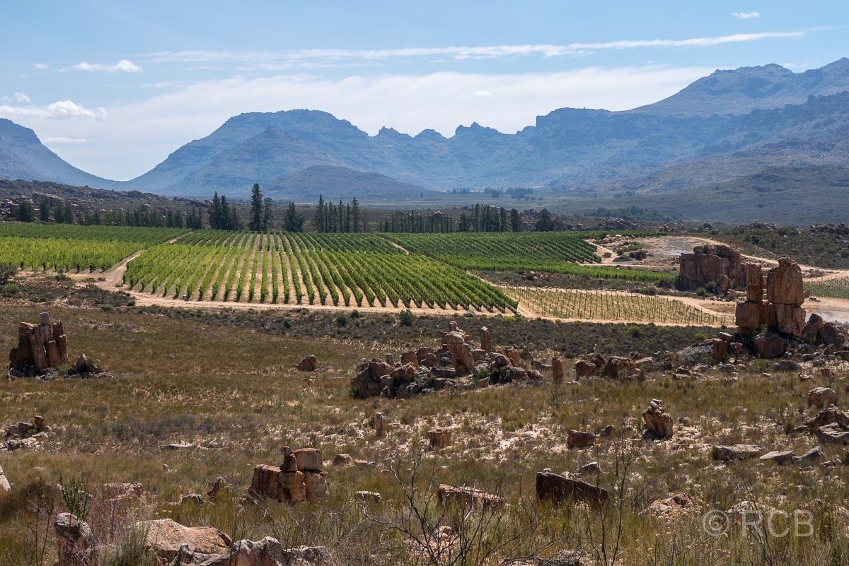 Weinanbau im Tal des Matjiesrivier