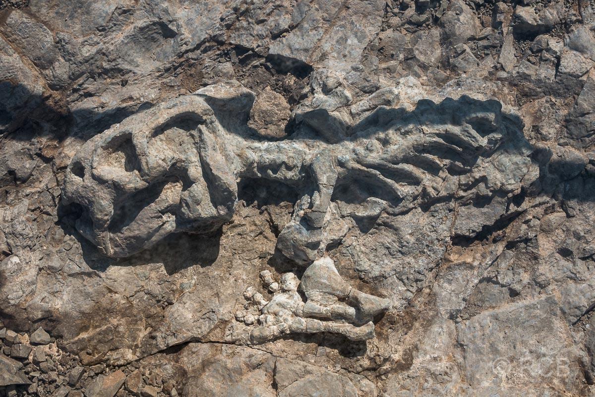 Versteinerung am Fossil Track, Karoo NP