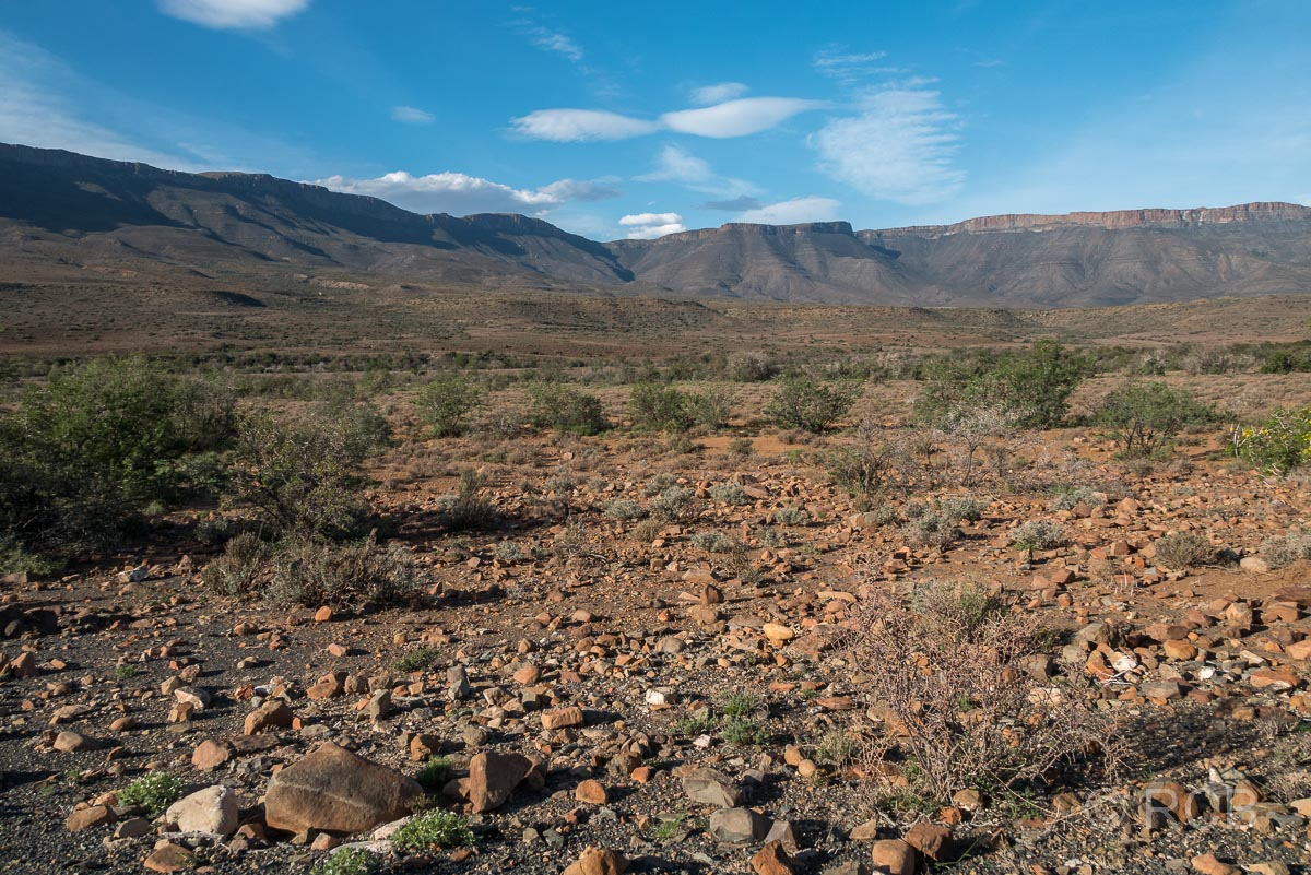 aride Landschaft im Karoo National Park