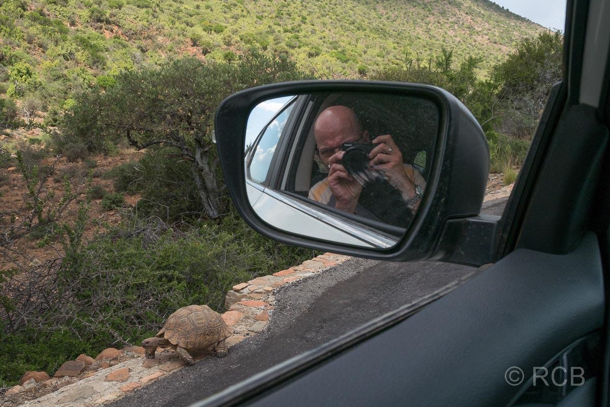 Mann fotografiert Schildkröte aus einem Auto heraus, Cambedoo National Park