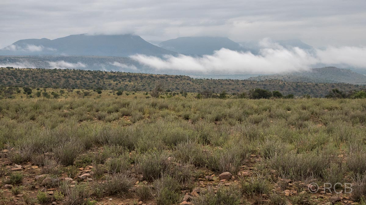 Rooiplaat Loop, Mountain Zebra National Park