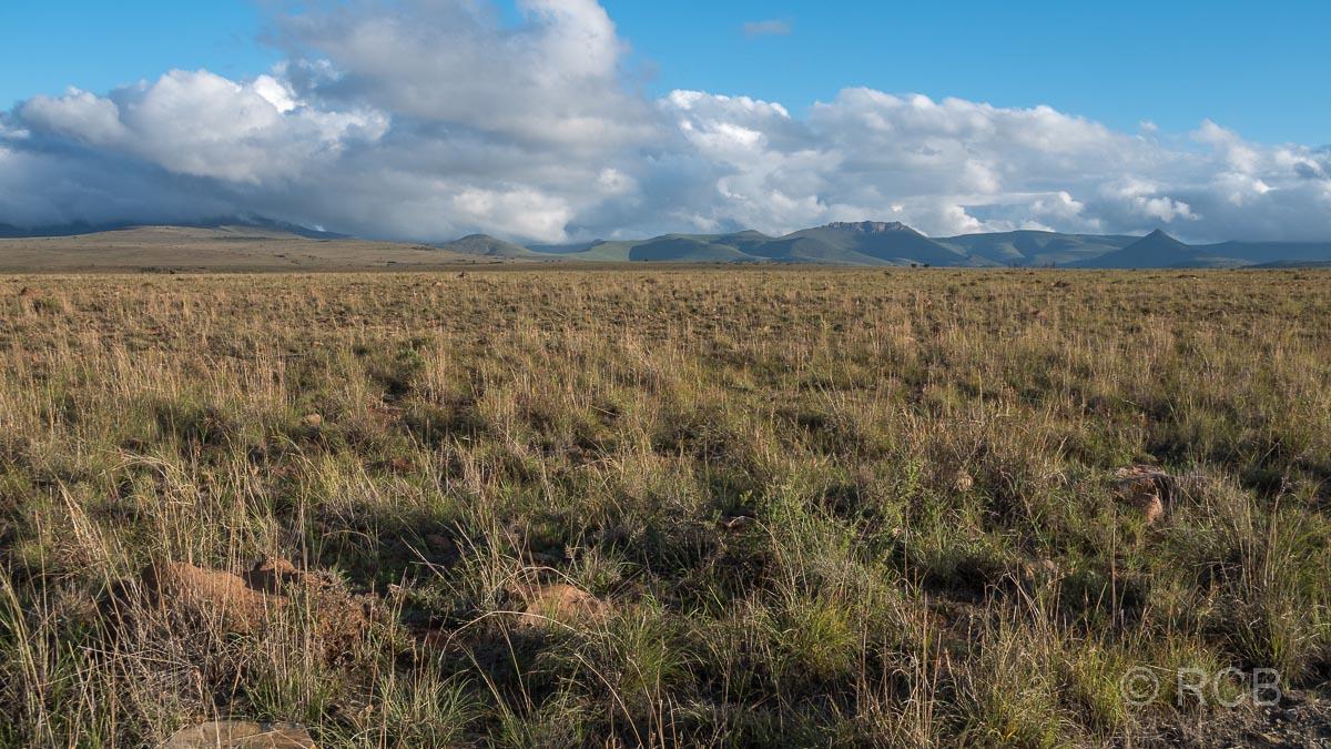 Landschaft im Mountain Zebra National Park