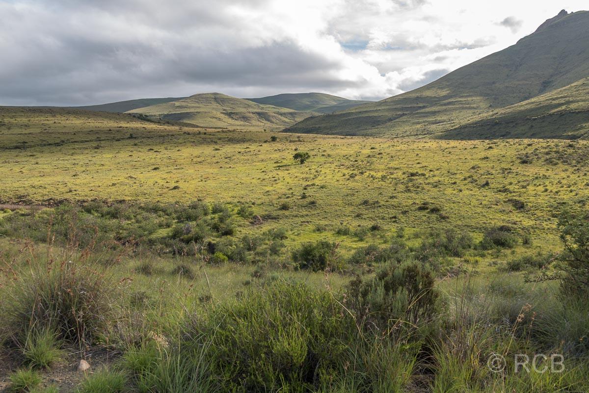 grüne Graslandschaft am Kranskop Loop, Mountain Zebra National Park