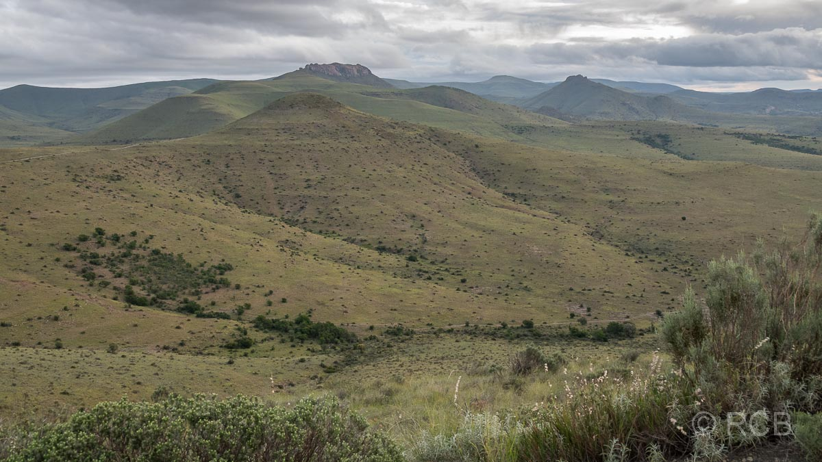 Ausblick über Hügel vom Kranskop Loop, Mountain Zebra National Park