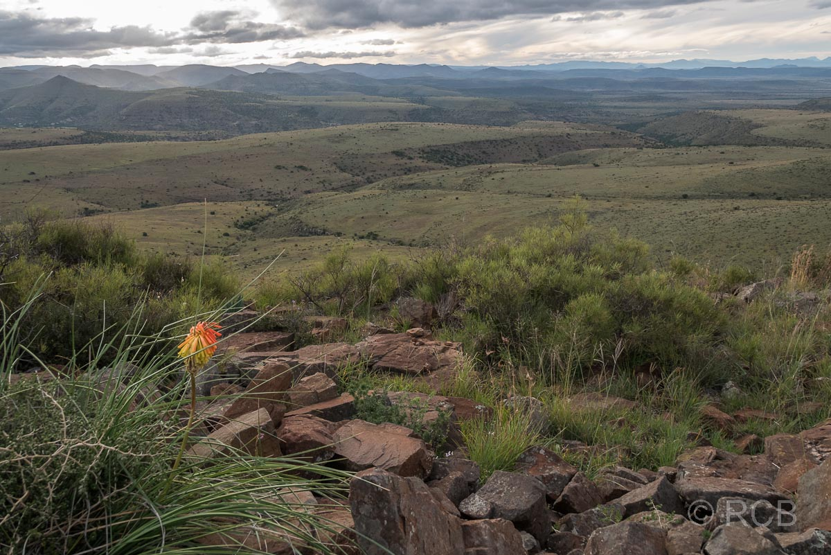 weite Fernblicke vom Kranskop Loop aus, Mountain Zebra National Park