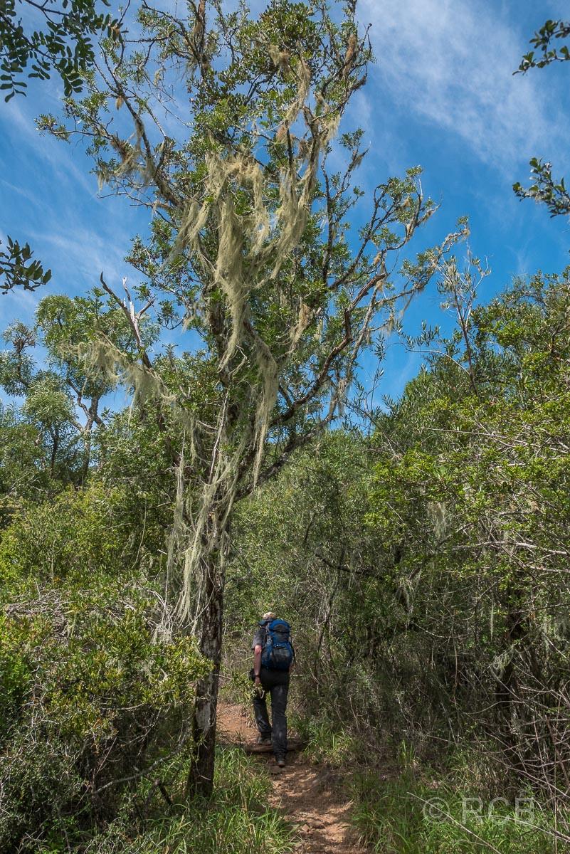 Mann wandert durch lichten Wald bergauf, Addo Elephant National Park
