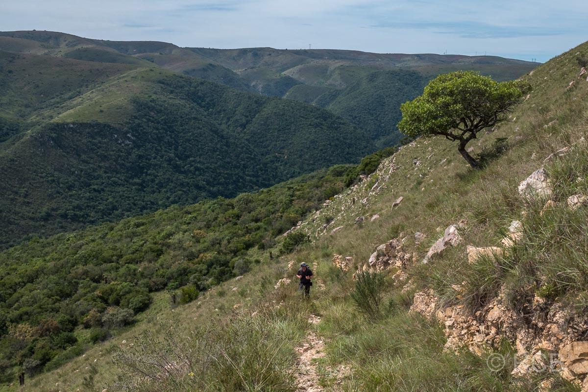 Blick über die Weiten der Zuurberg Section des Addo Elephant National Park