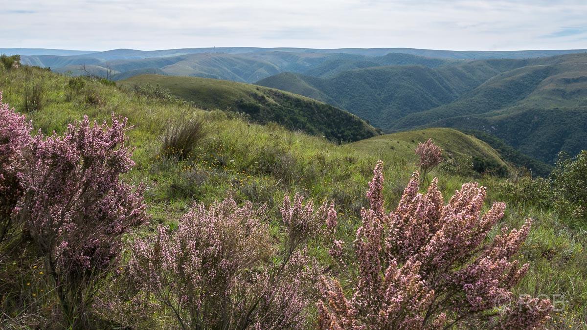 Heidekraut und grüne Hügel in der Zuurberg Section des Addo Elephant National Parks