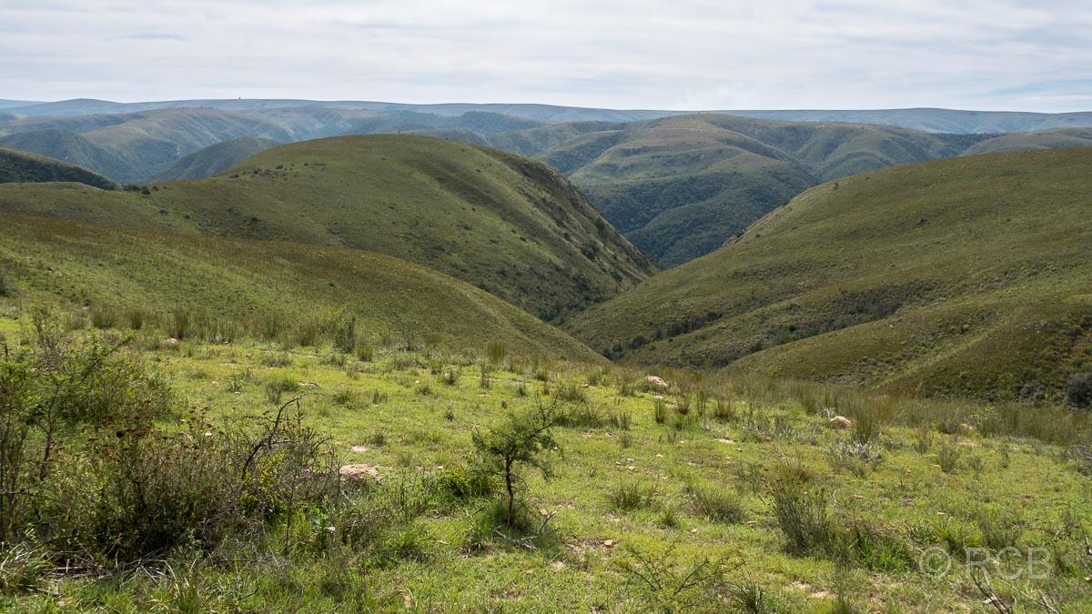 grüne Hügel in der Zuurberg Section des Addo Elephant National Park