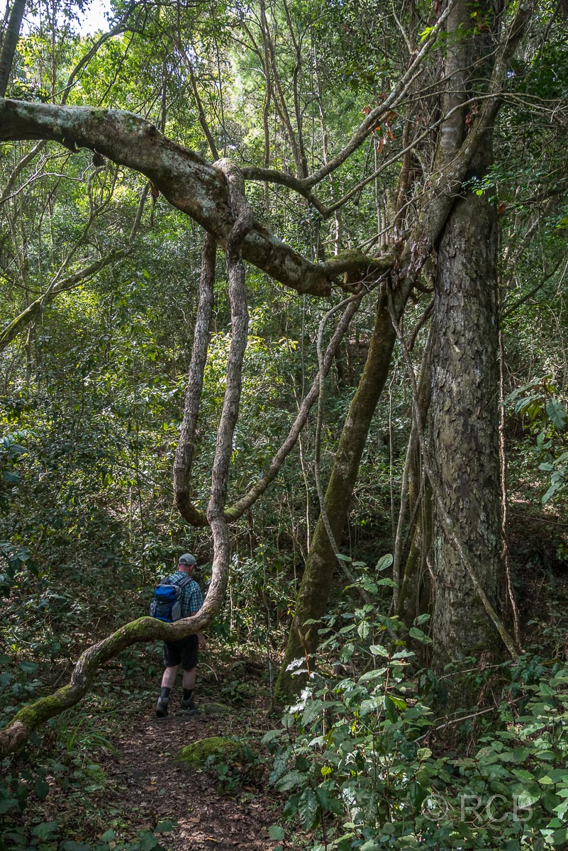 Wanderer auf dem Blue Duiker Trail, Tsitsikamma Section des Garden Route National Park