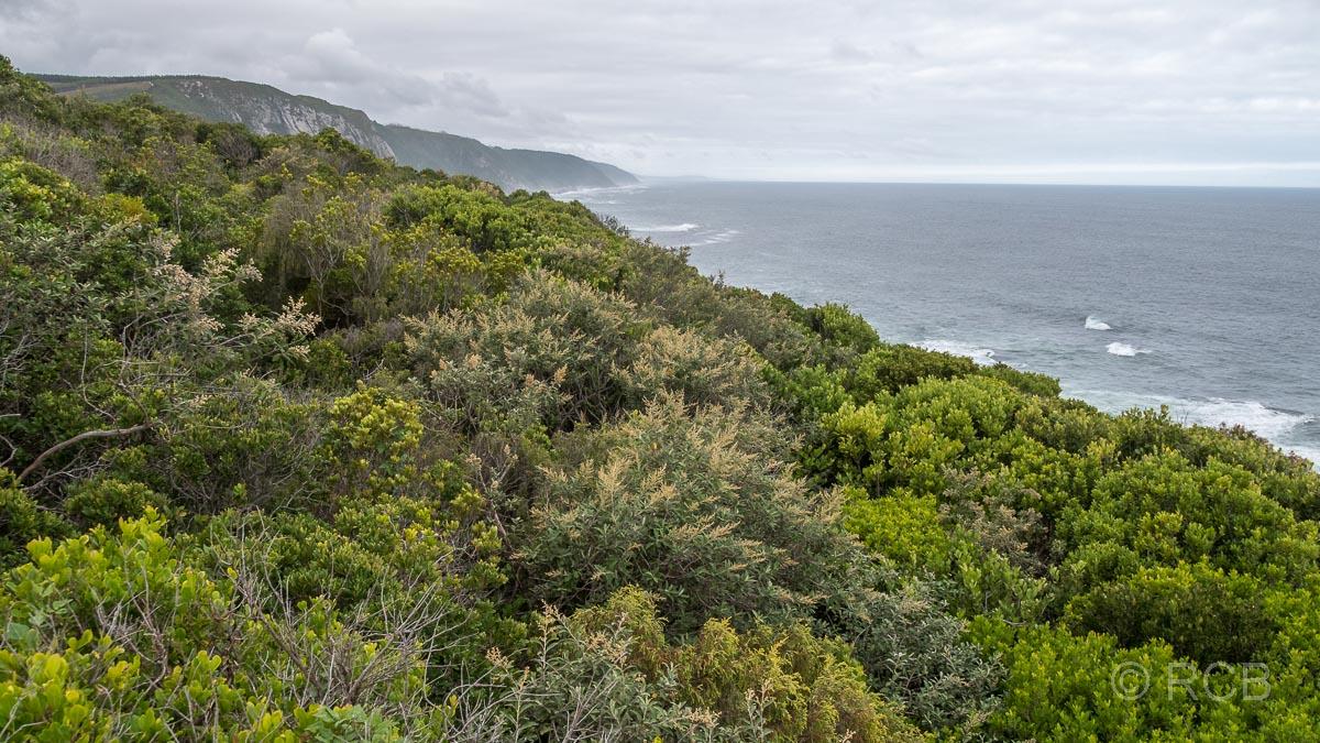Blick über die Küste der Tsitsikamma Section des Garden Route National Park am Storms River Mouth