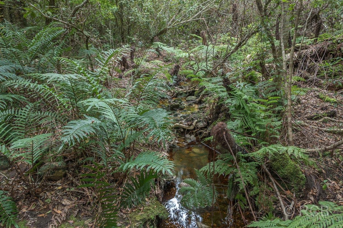 Farne in der Tsitsikamma Section des Garden Route National Park
