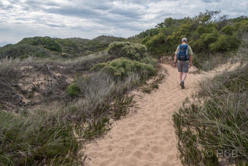 Mann wandert durch Dünen auf dem Rundwanderweg um die Robberg Peninsula