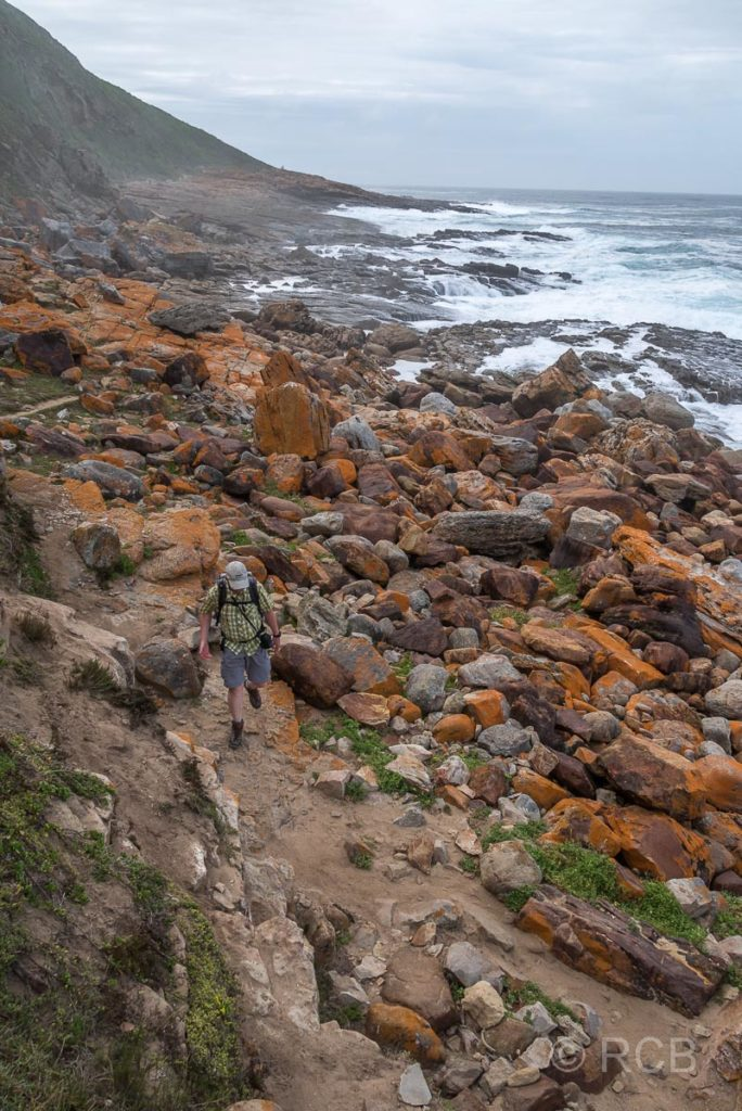 Mann auf dem Rundwanderweg entlang der Küste der Robberg Peninsula