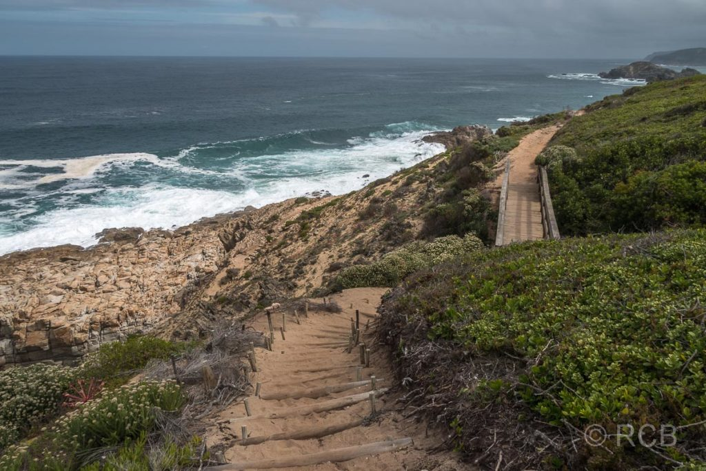 Rundwanderweg an der Küste der Robberg Peninsula