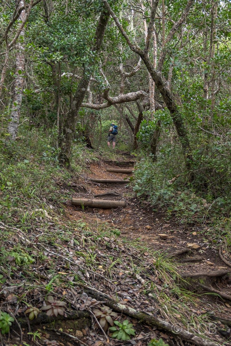 Mann wandert entlang von Stufen hinauf in den Wald auf dem Salt River Mouth Trail bei Nature's Valley